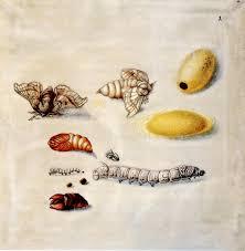 insekten Maria S